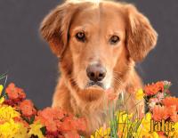 November Calendar Dog