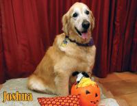 October Calendar Dog