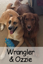 Wrangler & Ozzie